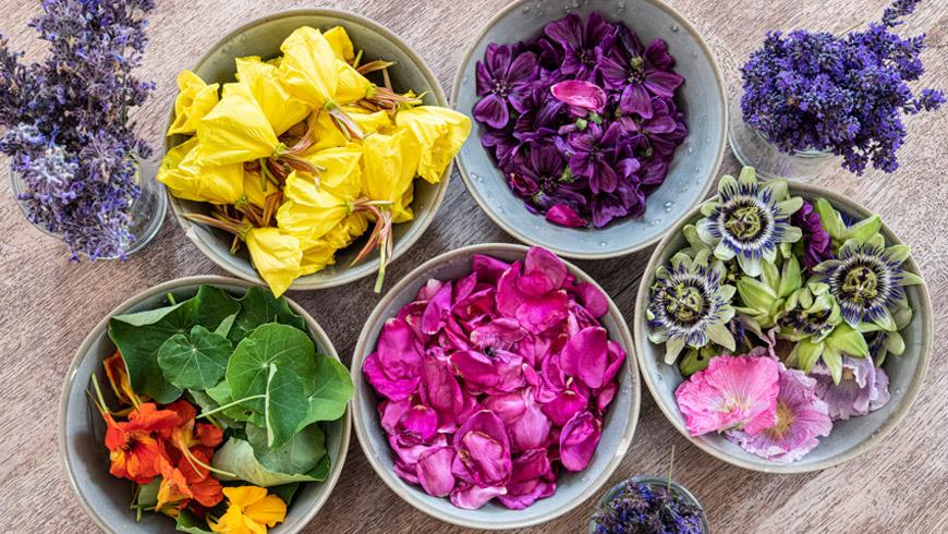 Fleurs et plantes séchées