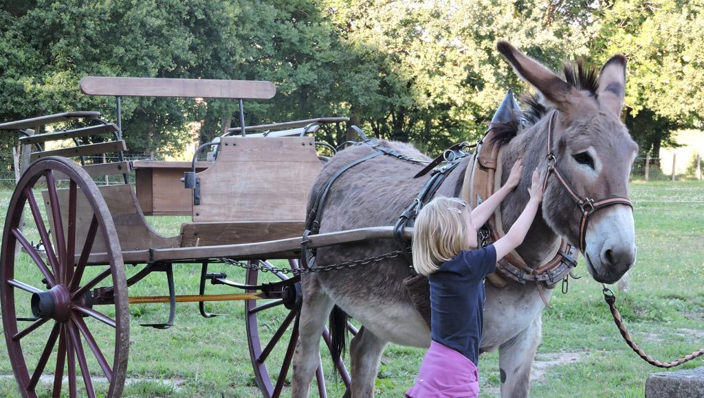 Approche de l'âne à la ferme